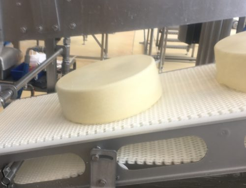 On-line estimation of dry matter and fat content in production blocks of cheese by NIR spectroscopy